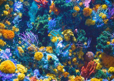 SWYM at the Aquarium